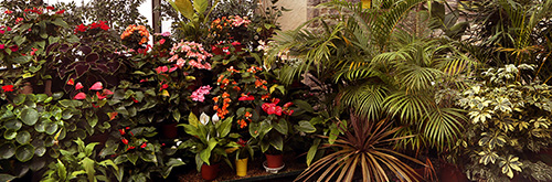 Plants within the conservatory